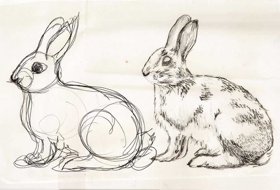 Wild-foods-sketch-1